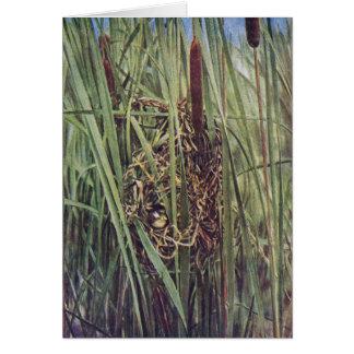 Jerarquía del Wren de pantano en Cattails Felicitación