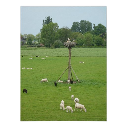 Jerarquía poste de la cigüeña y ovejas con los cor poster