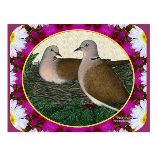 Jerarquía y flores de la paloma postal