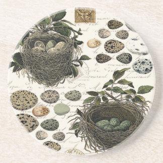 Jerarquías y huevos franceses del pájaro del posavasos cerveza