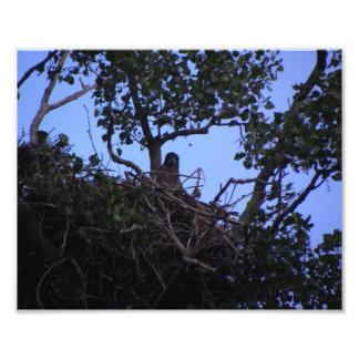 Jerarquización de Eagle Fotos