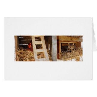 Jerarquización de la gallina y del gato tarjeta de felicitación