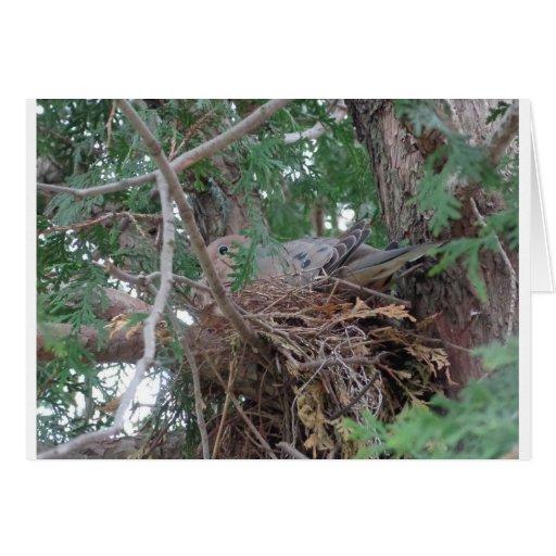 Jerarquización de la paloma de la mañana tarjeta de felicitación