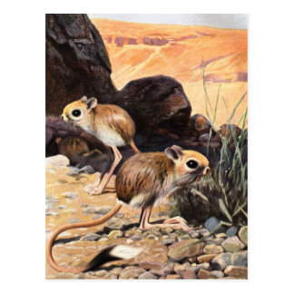 Jerboa Tees and Gifts Postcard