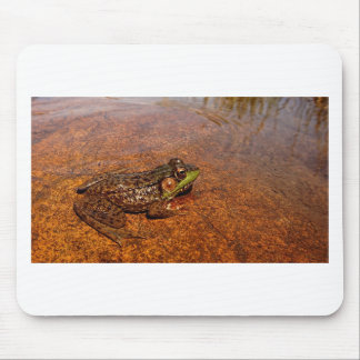 Jerimiah was a Bullfrog Mouse Pad