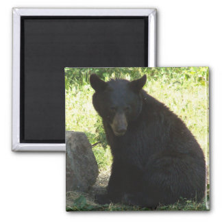 Jerry's Backyard Bear 2 Inch Square Magnet