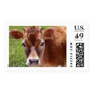 Jersey calf postage