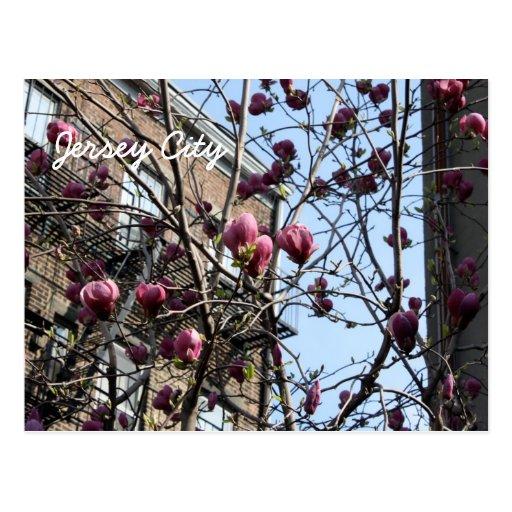 Jersey city flowers postcard