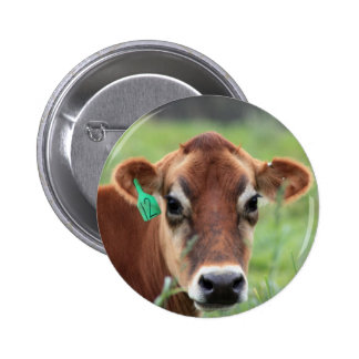 Jersey Cow Button