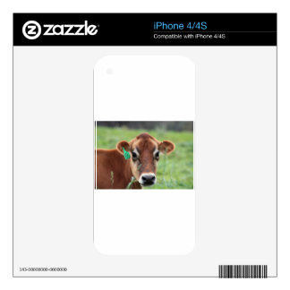 Jersey Cow Decal For The iPhone 4