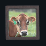 "Jersey Cow Keepsake Box<br><div class=""desc"">Photos taken by me Karrie Remington Photography. This photo was taken in upstate NY,  where I snuck up on her sleeping and this was the look that I got when she woke up. Nothing better then walking the pastures capturing the cows</div>"