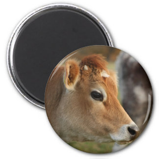 Jersey Cow Refrigerator Magnets