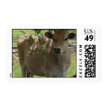 Jersey Cow Postage Stamps