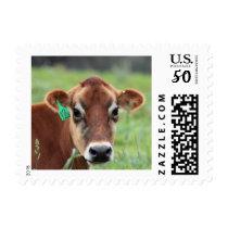 Jersey Cow Stamp