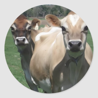 Jersey cows classic round sticker