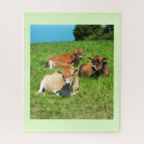 Jersey cows jigsaw puzzle
