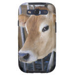 Jersey dairy cow with head in head lock. samsung galaxy SIII covers