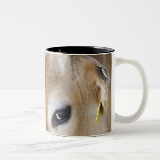 Jersey dairy cow with head in head lock. Two-Tone coffee mug