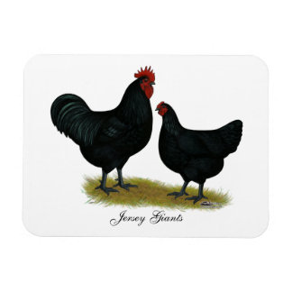 Jersey Giant Chickens Magnet