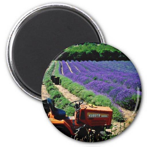 Jersey lavender farm, Jersey Channel Islands, Engl Fridge Magnet