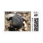 Jersey Shore Seashells Stamp
