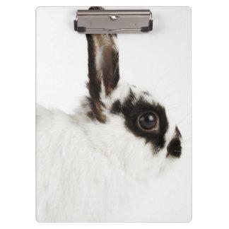 Jersey Wooly Rabbit Clipboard