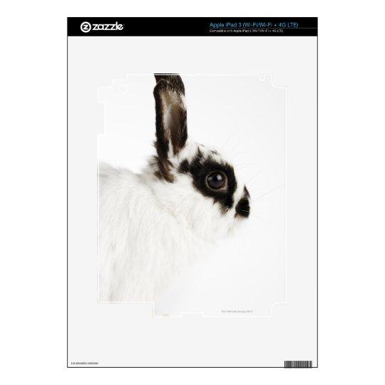 Jersey Wooly Rabbit iPad 3 Skin