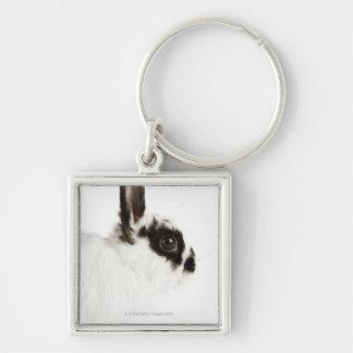 Jersey Wooly Rabbit Keychain