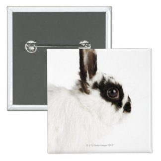 Jersey Wooly Rabbit Pinback Button