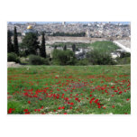 Jerusalem of Gold and Red Flowers Postcard