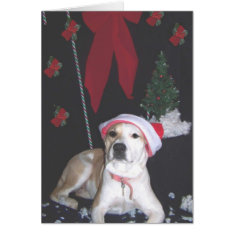 jerzy's-second-christmas card at Zazzle