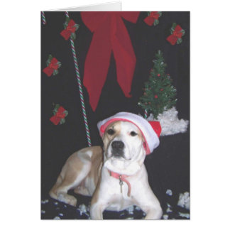jerzy's-second-christmas card