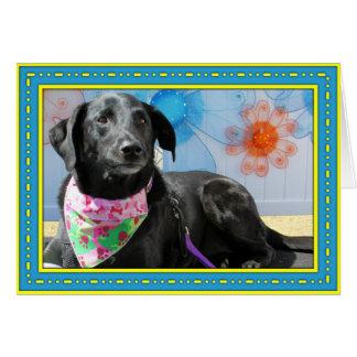 Jessie - Black Labrador