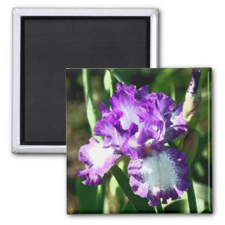 Jessie's Song 2 Inch Square Magnet