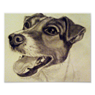 Jester the Jack Russell Terrier Poster