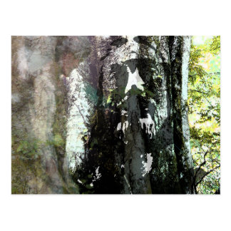 Jesus and the Tree Postcard
