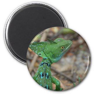 Jesus Christ Lizard Fridge Magnets
