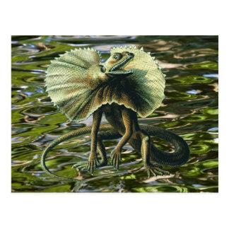 Jesus Lizard Postcard