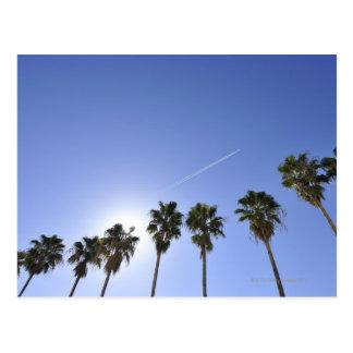 Jet Stream Over Palm trees Postcard