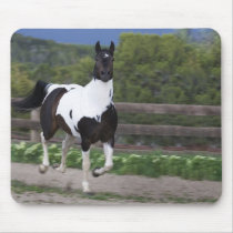 Jet the Paint Horse Running Mouse Pad