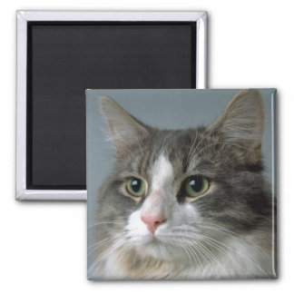 Jewel 1 2 inch square magnet