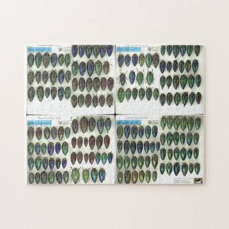 Jewel beetle puzzle