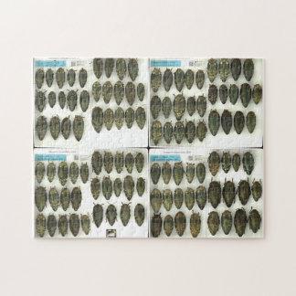 Jewel beetle puzzles