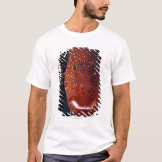 Jewel Grouper, Cephalopholis miniata T-Shirt