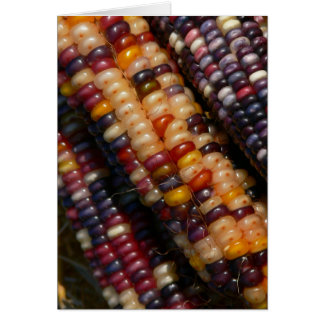 JEWEL-LIKE COLORFUL KERNELS OF INDIAN CORN/PHOTOG. CARD