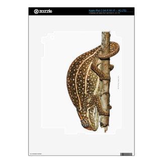 Jewelled chameleon, Campan's chameleon iPad 3 Skins