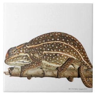 Jewelled chameleon, Campan's chameleon Ceramic Tile