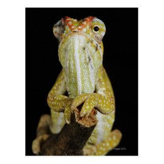 Jewelled chameleon, or Campan's chameleon Postcard