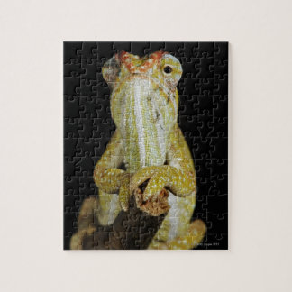 Jewelled chameleon, or Campan's chameleon Jigsaw Puzzle