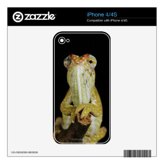 Jewelled chameleon, or Campan's chameleon Skin For iPhone 4